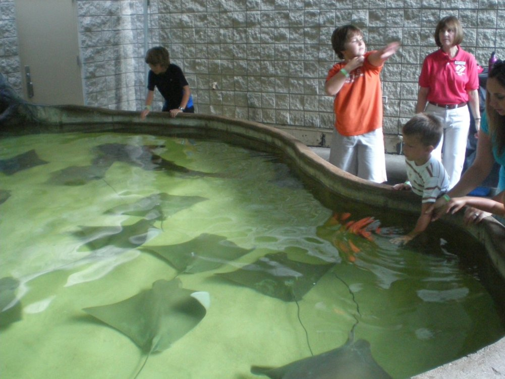 Baudvillian kids petting the stingrays
