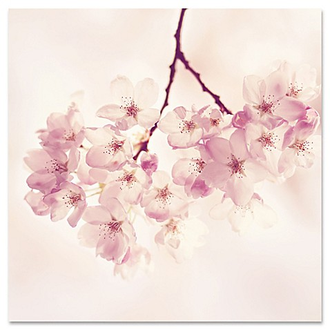 Marmont hill quotcherry blossomsquot canvas wall art bed bath for Best brand of paint for kitchen cabinets with cherry blossom canvas wall art