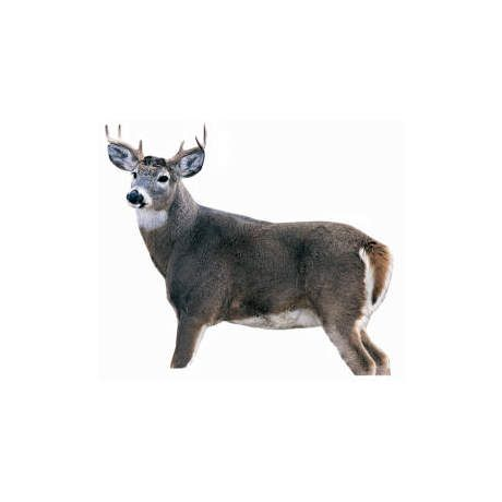 Montana Decoy Silhouette Buck Whitetail Deer Decoy