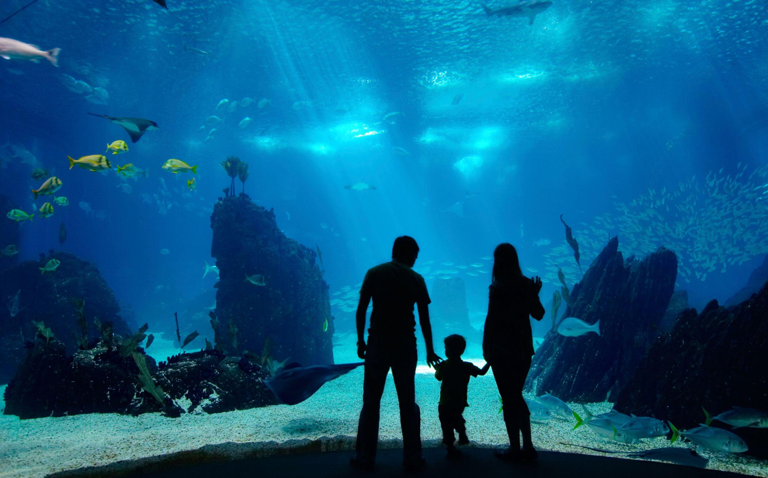 Family at an aquarium photograph