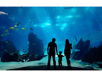 Family at an aquarium photograph