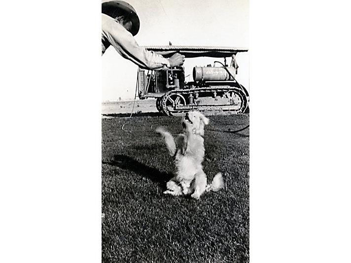 家里的小狗在拖拉机旁边玩耍