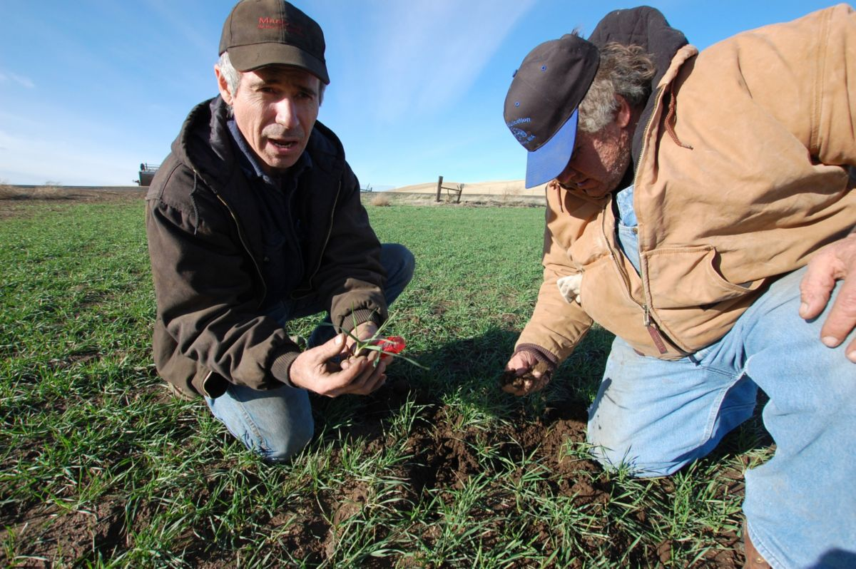 Monte Miller, left, and Ronnie Miller in a recently planted field of winter wheat.