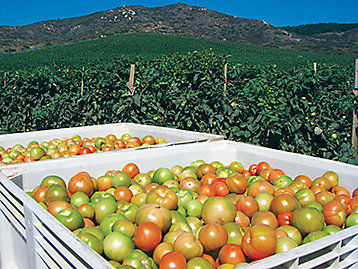 Customer Stories - West Coast Tomato Growers