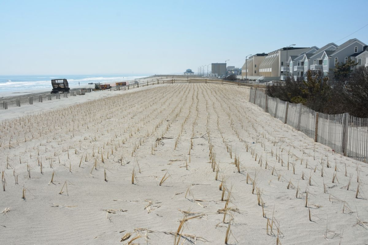 """We carefully replenish the beach to precisely match the template and restore the dune grass to make it look as if we were never here. We are 100 percent environmentally friendly and even plan our work schedule to minimize any impact on the nearby bird sanctuaries."""