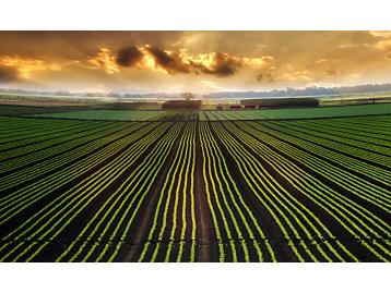 The agricultural landscape