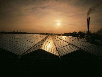 Van Diemen Greenhouse