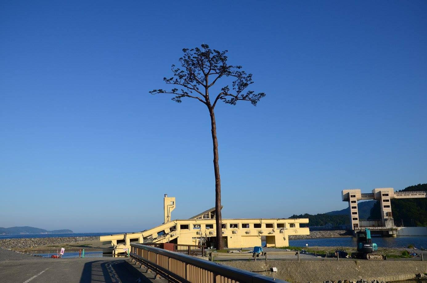 Miracle Pine of Rikuzentakata