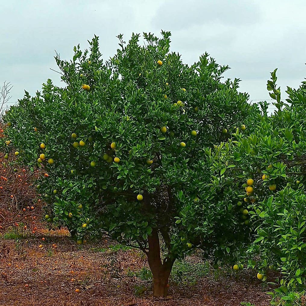Increased water retention of silted soil helps crops resist drought - which is great for fruit trees.