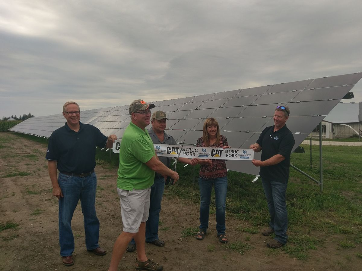 Solar panels help keep costs low for a local hog farm business