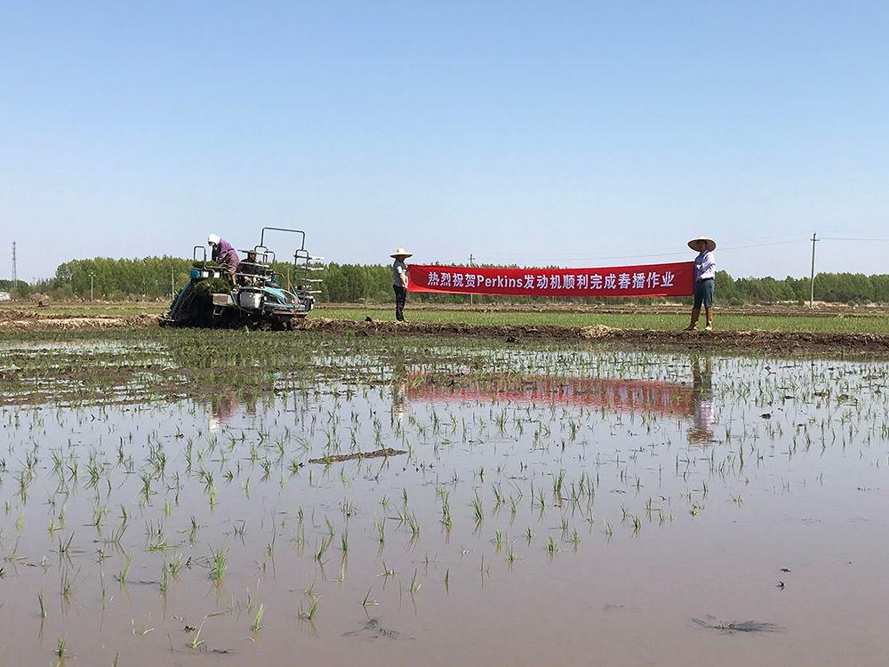 Jinhe winning the race on rice