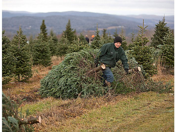 The 200-acre farm in New Canada, Maine produces roughly 7,000 Christmas trees annually.