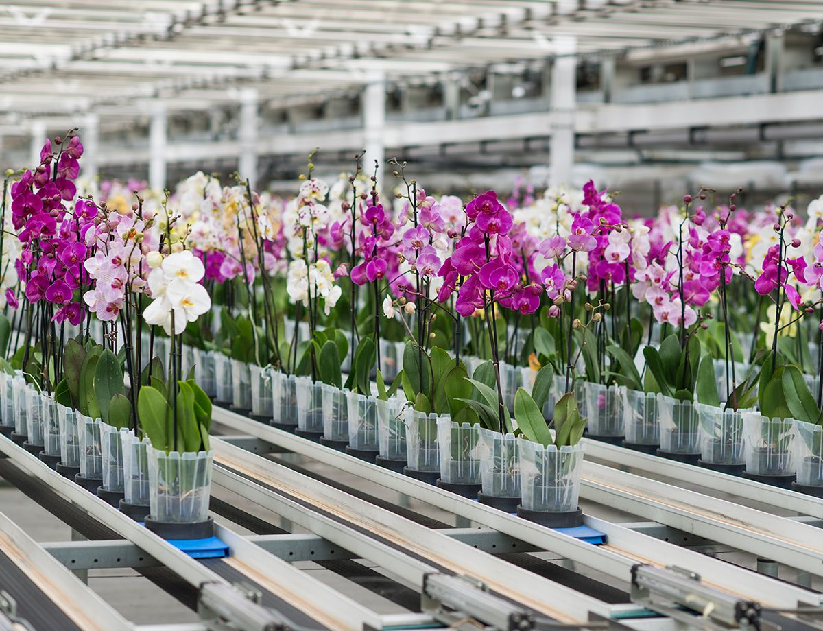Cat® power solutions reduce costs for orchid expansion.