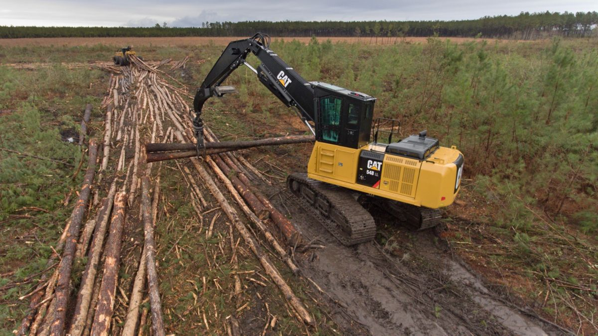 logging forestry