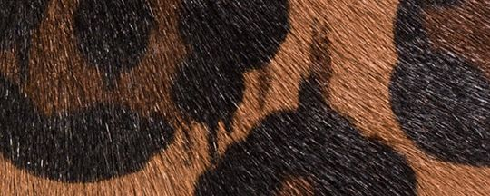 BLACK COPPER/WILD BEAST