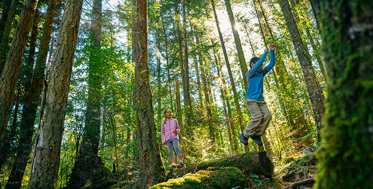 Two children walk on a fallen log in the forest.