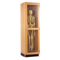 Science Classroom Skeleton Storage Cabinet, L70065