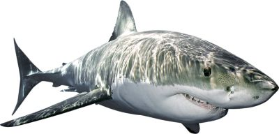 Shark Fathead Wall Decal