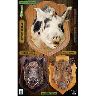 Mounted Boar Head - Fathead Jr.