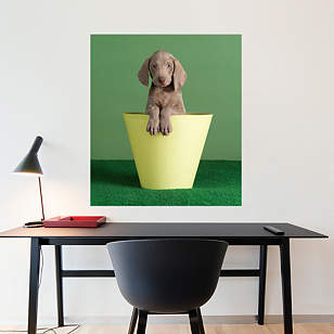 Crow's Nest by William Wegman
