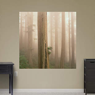 Redwoods in Fog by Michael Frye