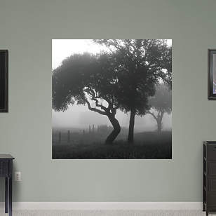 Texas Hill Country Trees in Fog by Keith Dotson