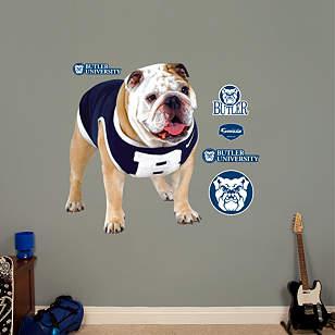 Butler Mascot - Butler Blue II