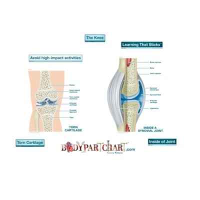 dr oz excercise for cartilage repair