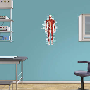 simplified digestive system labeled decal shop fathead