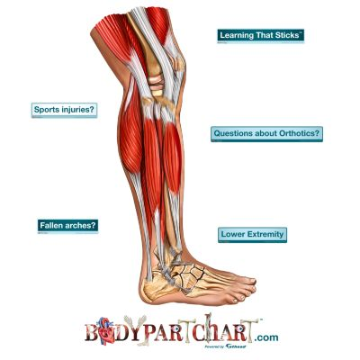 Lower Extremity - Free Extras
