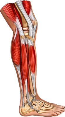 Lower Extremity - Product
