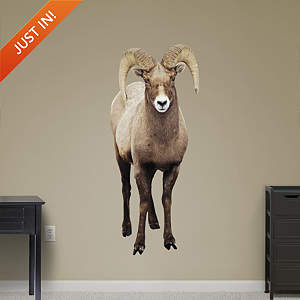 Big Horn Sheep Fathead Wall Decal