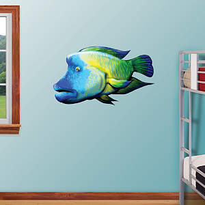 Humphead Fish Fathead Wall Decal