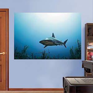 Reef Shark Mural Fathead Wall Decal