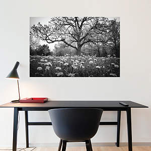 The Story Tree by Keith Dotson Fathead Wall Decal