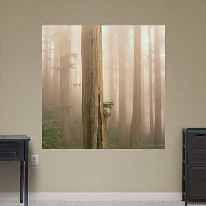 Redwoods in Fog by Michael Frye Fathead Wall Decal