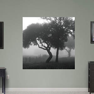 Texas Hill Country Trees in Fog by Keith Dotson Fathead Wall Decal