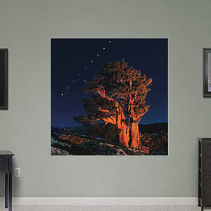 Sierra Juniper with the Moon Emerging from a Total Eclipse by Michael Frye Fathead Wall Decal
