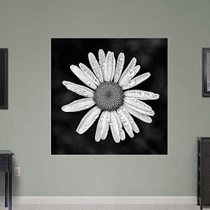 Rain Splashed Daisy by Keith Dotson Fathead Wall Decal