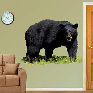Black Bear Fathead Wall Decal