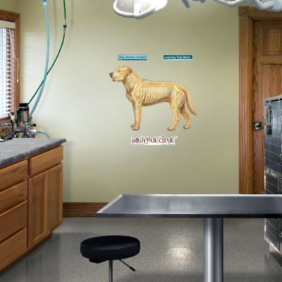 Dog Muscular System - Room View