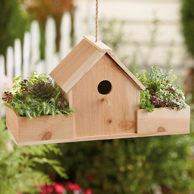 Birdhouse with Succulents Gift