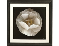 B&W Flowers Framed Art I