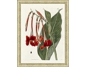 Large Red Botanical Framed Art I