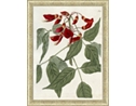 Large Red Botanical Framed Art II