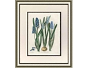 Blue Botanical Framed Art II