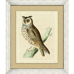 Owl Framed Art III