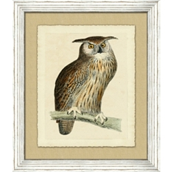 Owl Framed Art IV