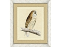 Owl Framed Art V