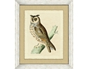 Owl Framed Art VI